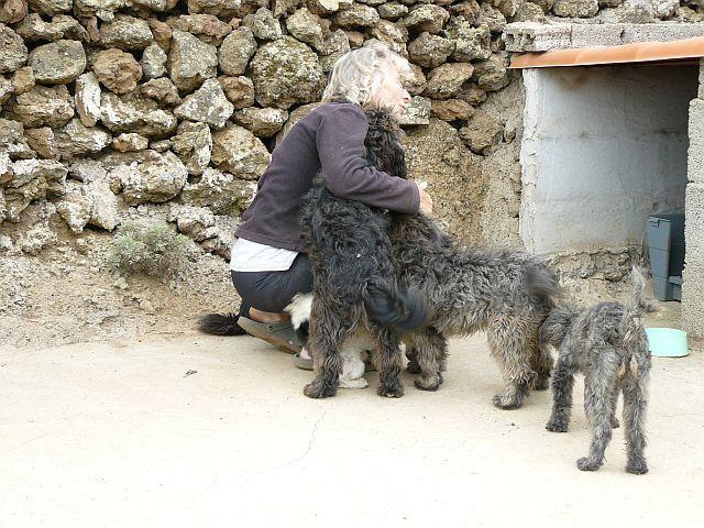 Ingrid mit Hunden