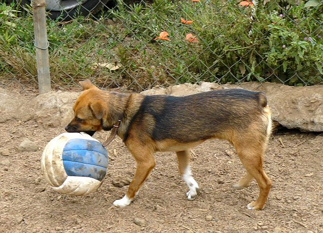 Pepe mit Ball
