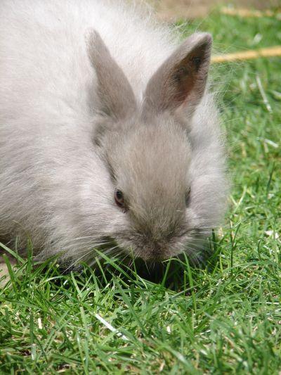 Beste Kaninchen Stift Drahtfechten Fotos - Elektrische ...