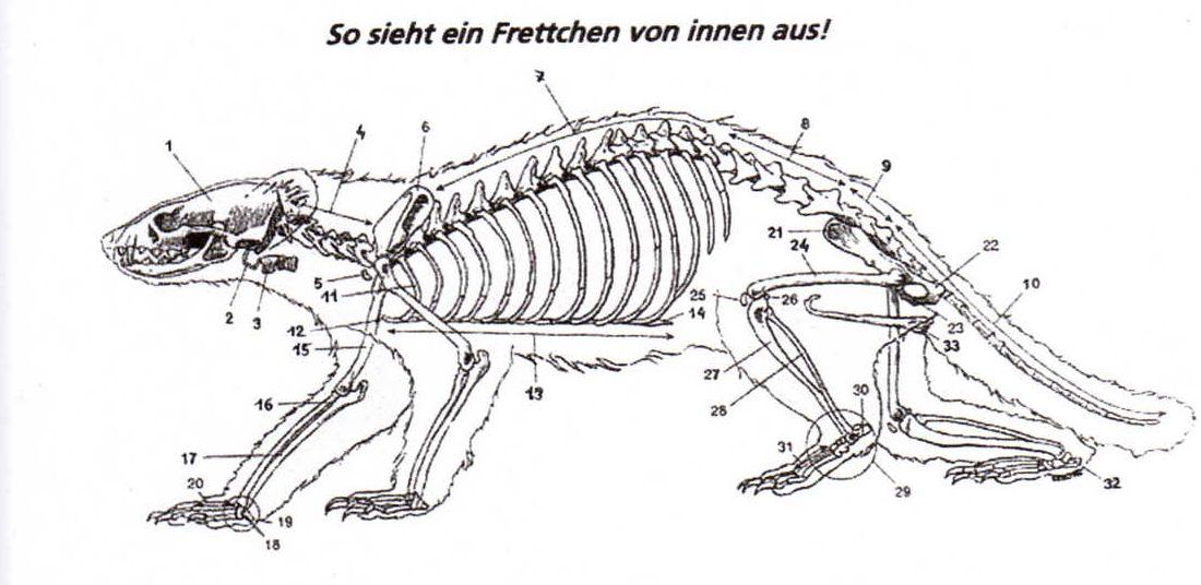 Karins-Frettchen-Wonderworld - Frettchensteckbrief