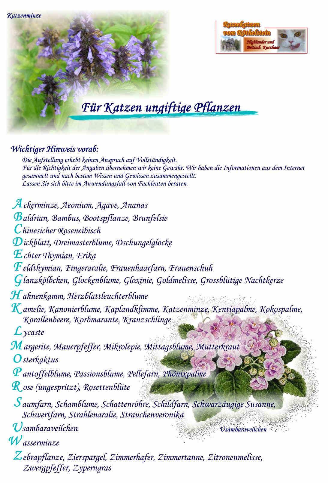 Rassekatzen vom Röthelstein in Sachsen im Vogtland - Wissenswertes