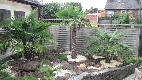 Palmen im garten mein palmengarten - Garten mit palmen gestalten ...