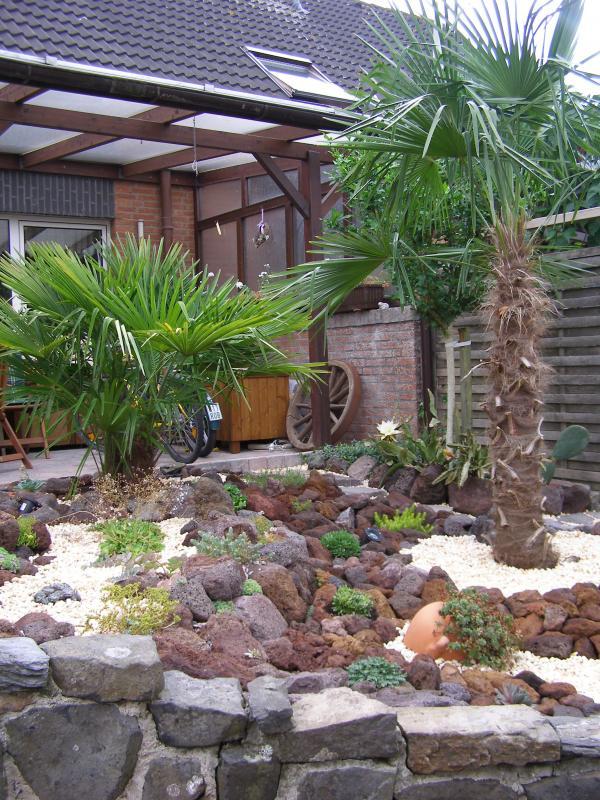 palmen im garten foto palmen im garten geo reisecommunity exotische palmen im garten s dliches