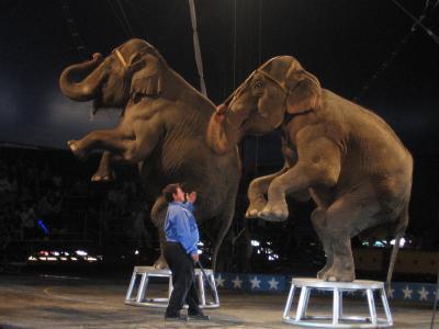 Elefantenvorstellung