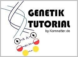 Genetik-Totorial by www.kornnatter.de