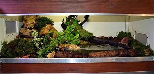 krabben terrarium