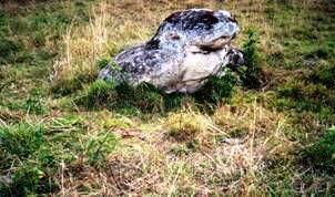 Resultado de imagen para la diosa rana lalaquiz