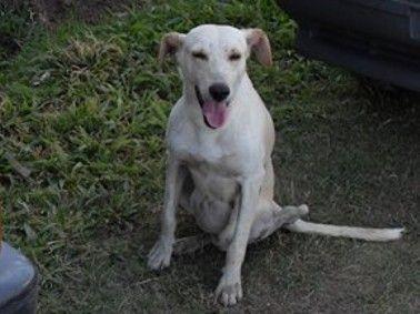 23/01/2009 - Blanquito es una perrito joven, cachorrón, obviamente con este nombre... color blanco, tamaño mediano. Cuando lo vimos la primera vez pensamos que tenía un tumor pero por suerte resultó ser una hernia que se corrigió con cirugía. Ahora Blanquito, que es un perro hermosísimo necesita familia, es muy bueno, agradecido como todos. Se entrega en adopción esterilizado. Contacto: Edit 154-688171