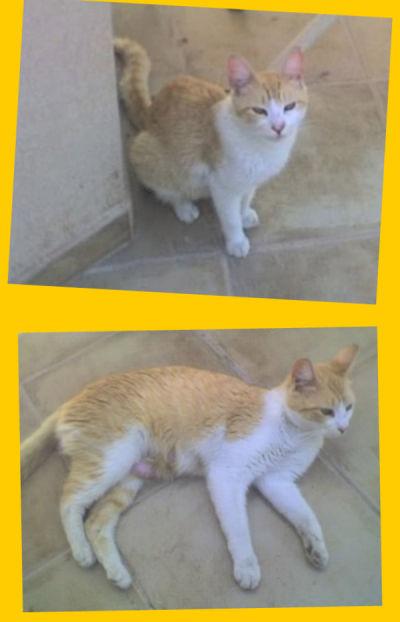 5/10/2009 - Se llama Catalina y no tiene más de un año. Vive en una casa abandonada y está esperando un hogar. Su mayor virtud es que es una de las gatas más cariñosas que conocí. Martín. martin.lavella@gmail.com Cel.: 156-970090