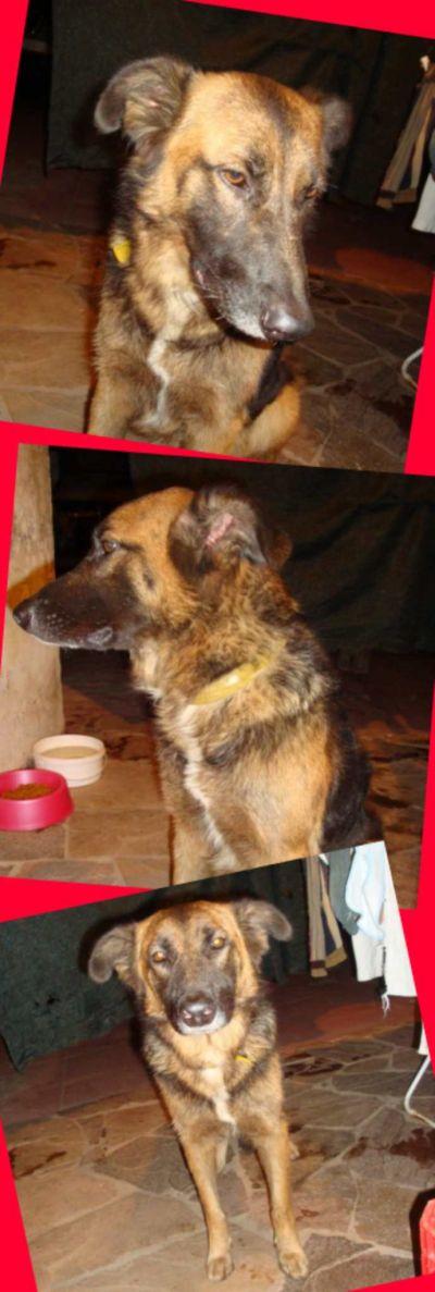 6/5/2009 - Encontrada el 27 de abril en Donado y Córdoba. Fue servida por un macho, ya esta esterilizada y espera reencontrarse con su familia.
