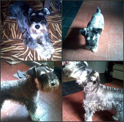 6/5/2009 - Anoche mis amigos encontraron este perrito en la puerta de la casa, cafferata 1400 y lo entraron, estamos buscando SOLO a sus dueños, no se da en adopción. CONTACTO: damian (03471) 155-93518/alejandra (0341) 155-528093