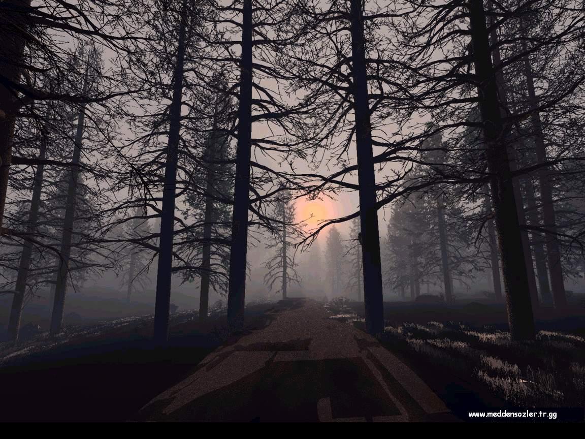 ağaçların ardından güneş