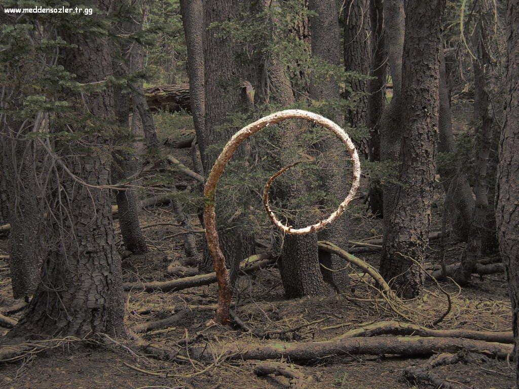 ağaçtan tuhaf şekil