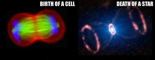 hücre, cell, yıldız, star, ölüm, doğum