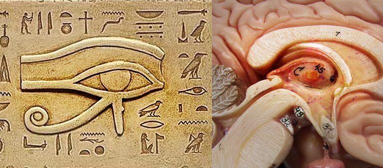 epifiz bezi, Mısır, Horus'un gözü
