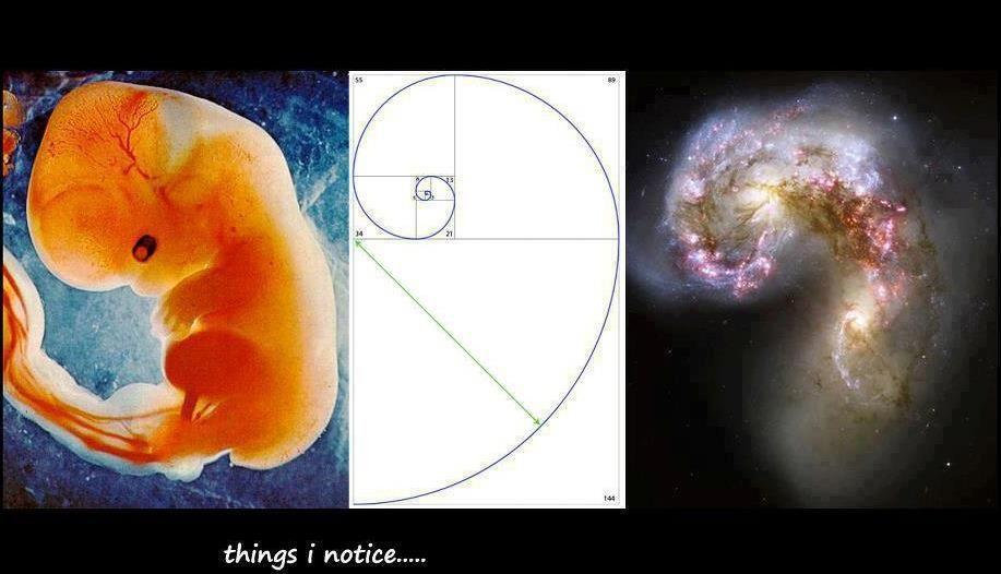 embriyo, galaksi
