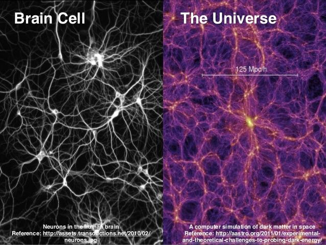 beyin hücresi, nöronlar, karanlık madde, neurons, dark matter