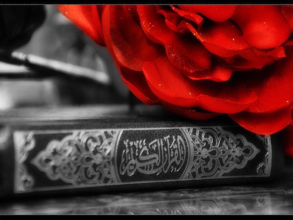 islam, kuran, gül, quran, rose