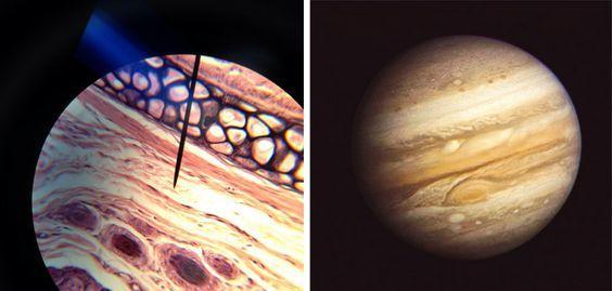 Kıkırdak, Jüpiter, cartilage