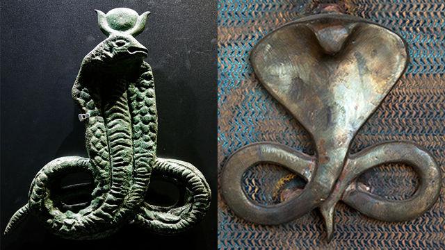 kobra, cobra