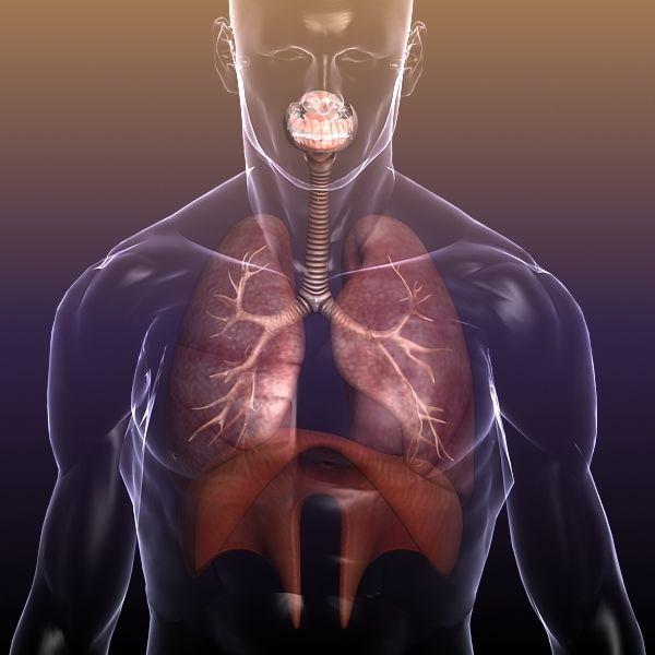 solunum sistemi, respiratory system