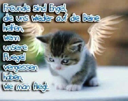 Grafik Katze als Engel