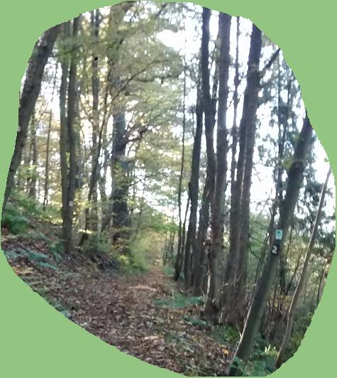 Ausschnitt Waldt