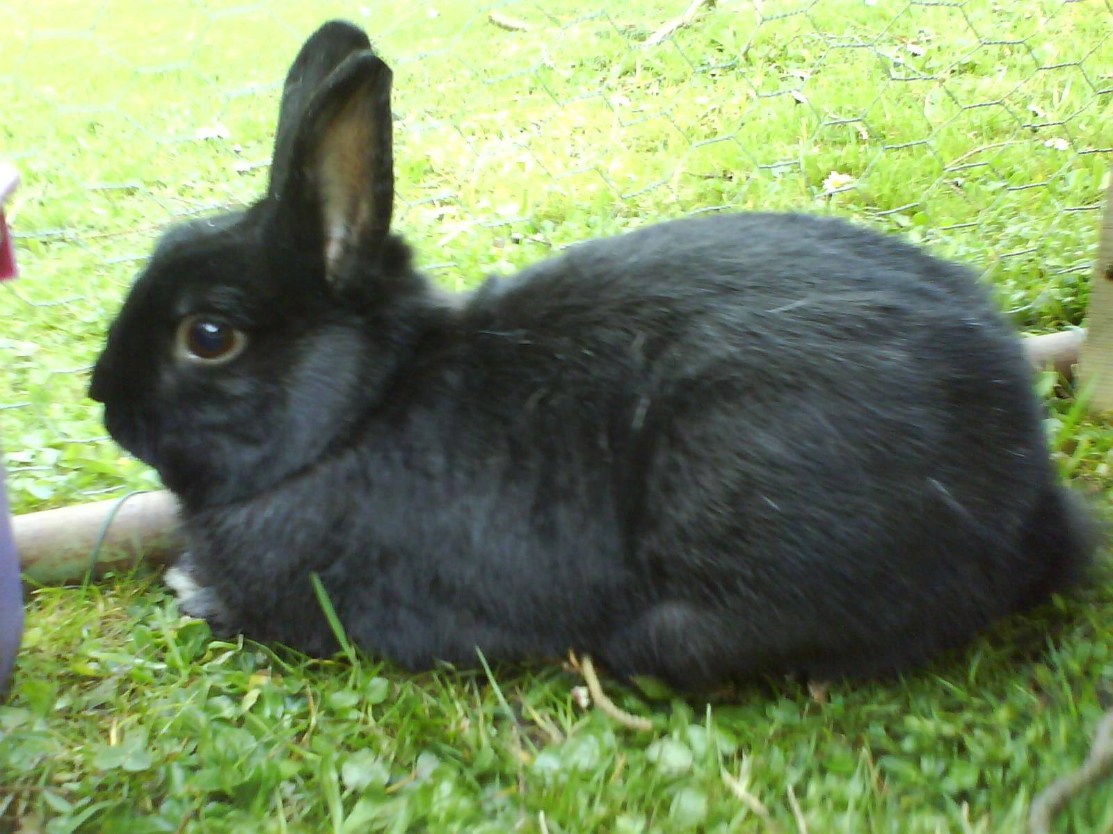 Meine Tiere Meine Kaninchen