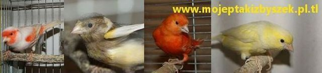 Ptaki Zbyszek
