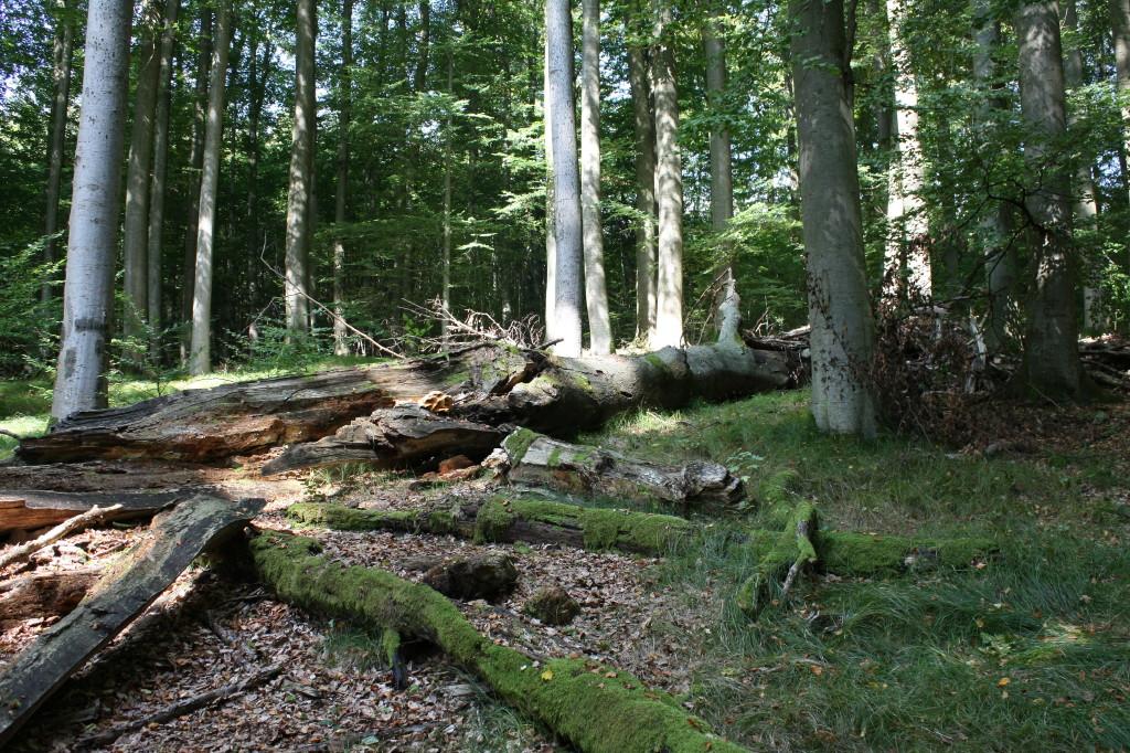 Nationalpark Steigerwald erweist sich<br />                         gut fürŽs Klima!