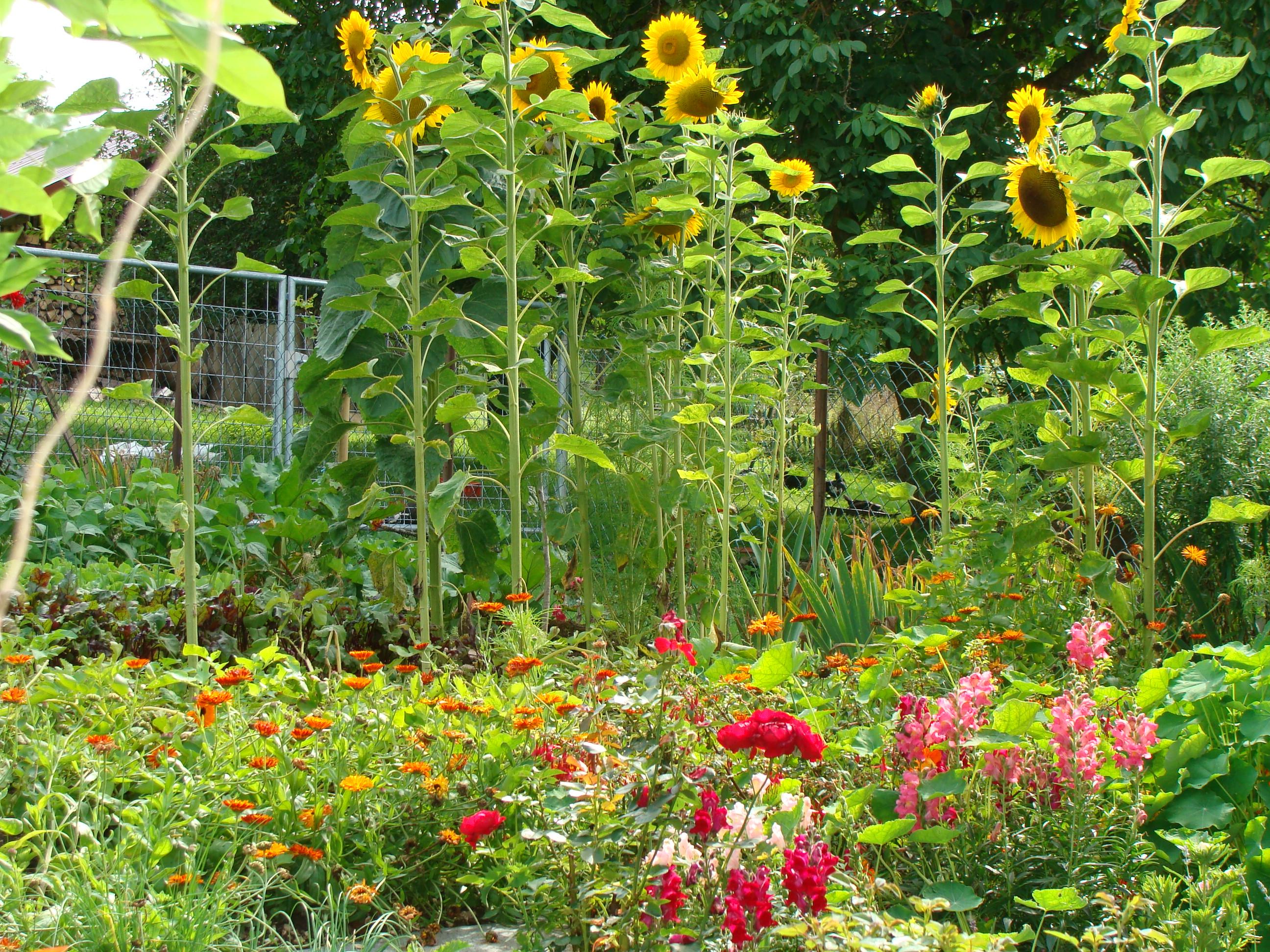 Ferienwohnung im Donautal - Terrasse und Garten