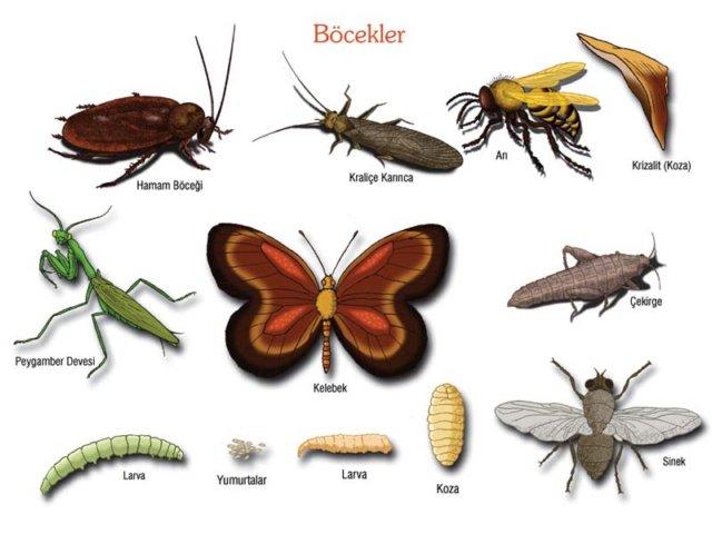 Böcek İlaçlama Firması Maltepe