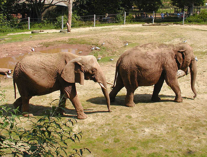 fil hakkında bilgiler yaşamı