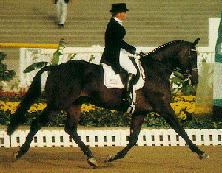 hollanda atları hakkında