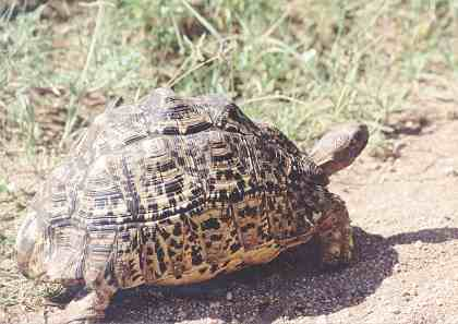 kaplumbağaların yaşamı