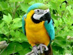 papağanlar hakkında bilgiler
