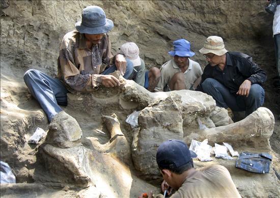 Hallan la osamenta de un elefante gigante de hace 200.000 años en Indonesia