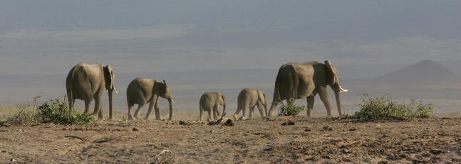Científicos estudian trasladar especies a nuevos hábitats para salvarlas del cambio climático
