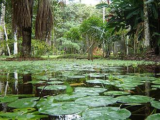 Parque Nacional de Amacayacu