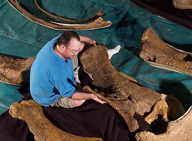 Un arqueólogo trabaja junto a uno de los restos de tres nuevas especies de dinosaurio hallados en Queensland