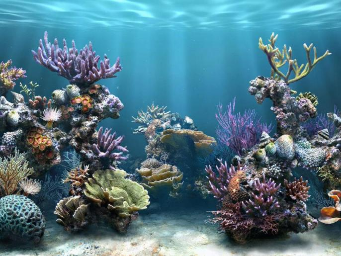 Los arrecifes de coral podrían desaparecer durante este siglo