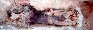 Restos de la momia hallada en el complejo funerario de Sakkara y que probablemente pertenecen a la reina Sesheshet, madre del faraón