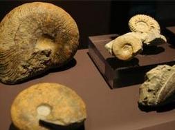 Fósiles en el Museo Arqueológico