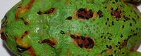 4-Spot-Patternless
