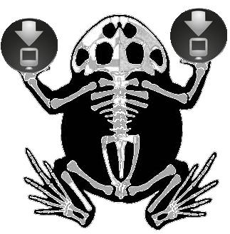 Schmuckhornfrosch Ceratophrys Amphibien Downloads