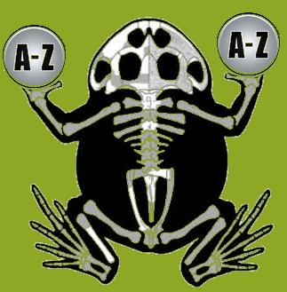 Schmuckhornfrosch Hornfrosch Pacman Frog Glaoosar glossary