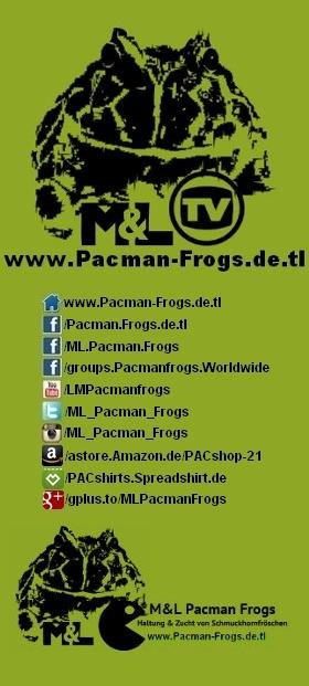 Schmuckhornfrosch, Hornfrosch, Ceratophrys sp., Pacmanfrogs