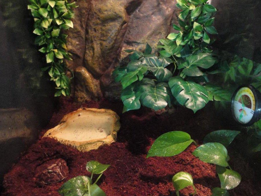 Beispiel eines naturnahen Schmuckhornfrosch Terrariums