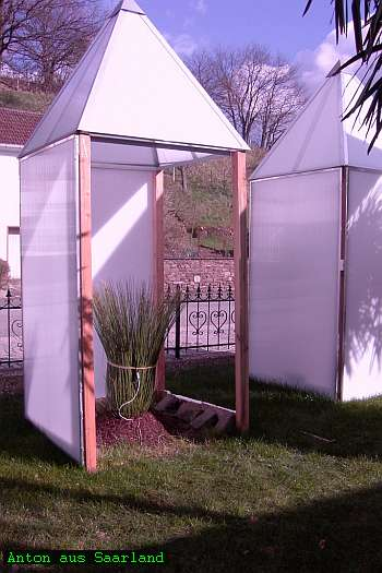 palmen s mlinge jungpflanzen winterschutz. Black Bedroom Furniture Sets. Home Design Ideas