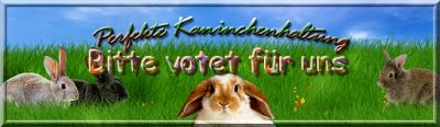 Perfekte Kaninchenhaltung